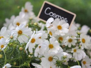 fleurs fraiches blanches